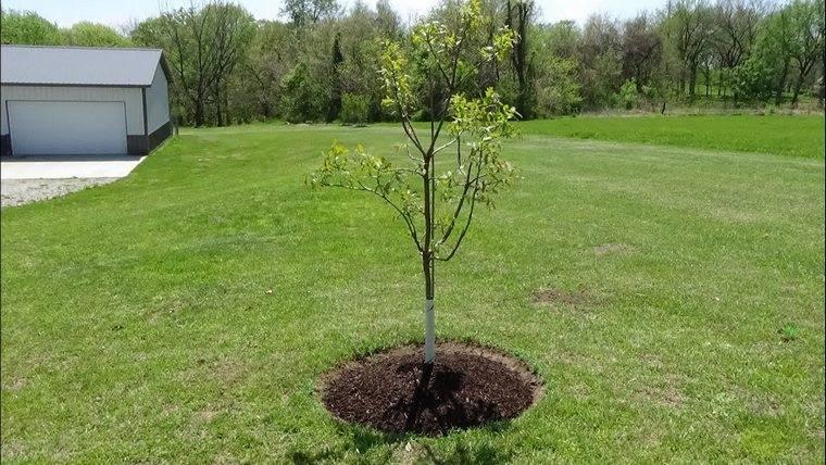 bordure autour d un arbre