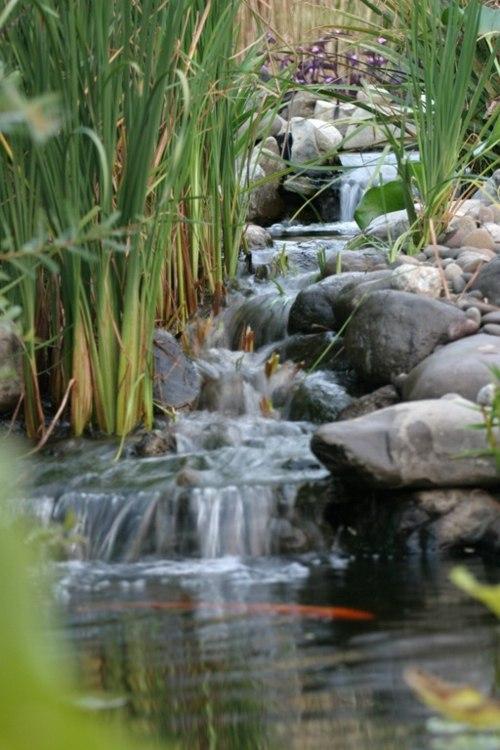 Bassin de jardin avec cascade qui dit mieux