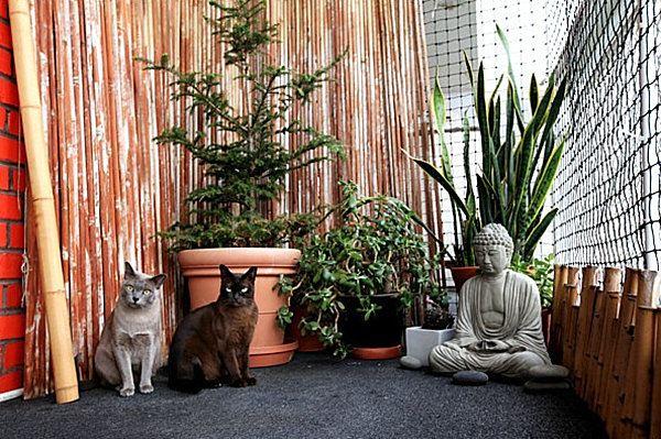 Un enclos pour chat  Catio nest pas une prison