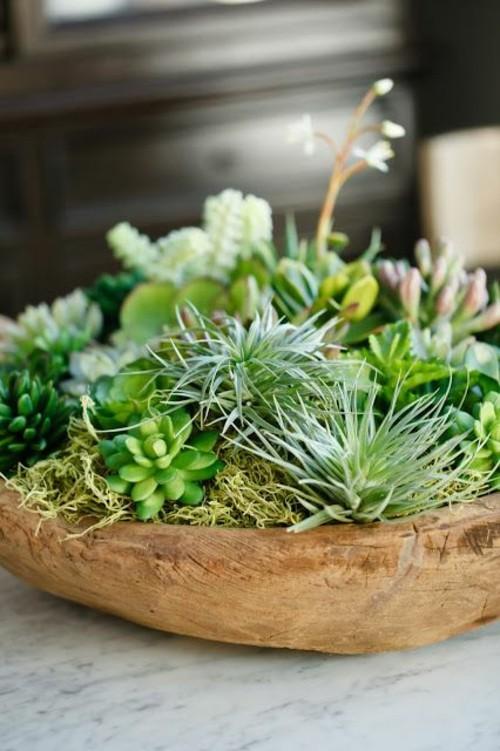 Plantes succulentes  ides darrangement