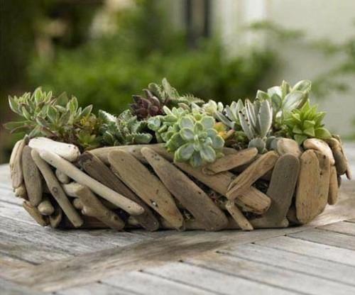 Succulentes  plantes robustes pour toutes les saisons