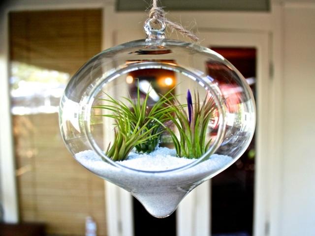 Un terrarium de plantes magnifique pour votre maison