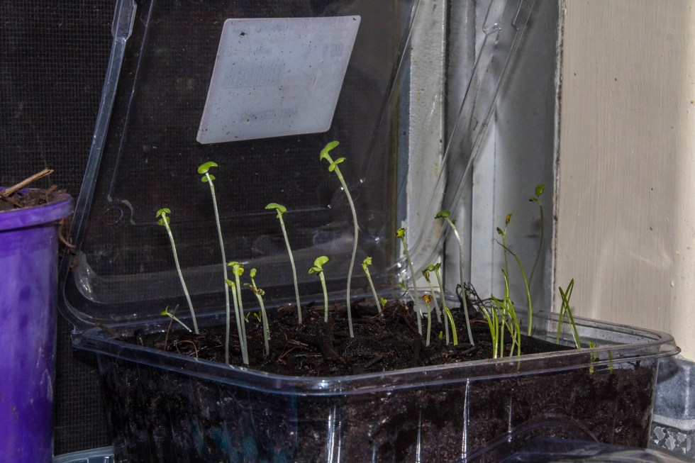 05/05/15 Day 12 Looks like there are 3 different types sprouting.