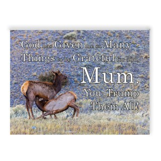 "Mother deer feeding her fawn on a rocky background and some grass, Yellowstone National Park, Montana, USA with text "" God has Given me so Many Things to be Grateful for and, Mum, You Trump Them All!"""