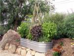 How To Design Vegetable Garden KYVs