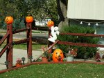 Outdoor Halloween Ideas