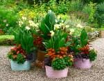 Outdoor Planter Ideas YBqw