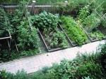 Vegetable Garden Design Ideas MtNd