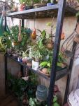 Balcony Garden Ideas In Mumbai