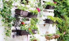 Balcony Garden Ideas Bangalore