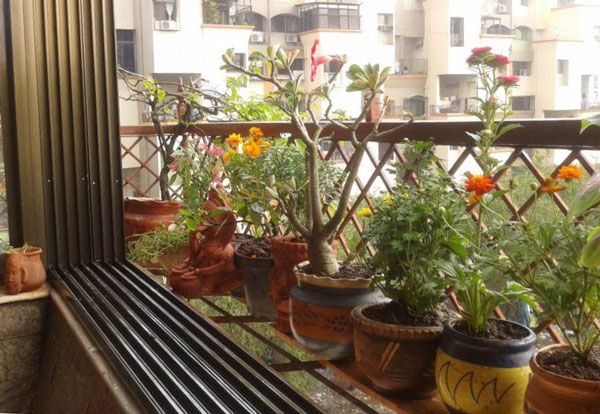 Get Indian Apartment Balcony Garden Ideas Images