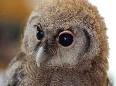 Eric the Owl at Lainston House