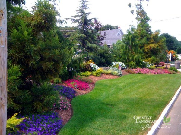 privacy planting creative landscapes