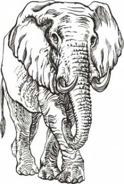 Elephant Engr Vector Free Vector Designs Cnc Free Vectors For All Machines Cutting Laser Router