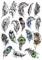 Peacock-Feather-Vector-Set-Free-Vector.jpg