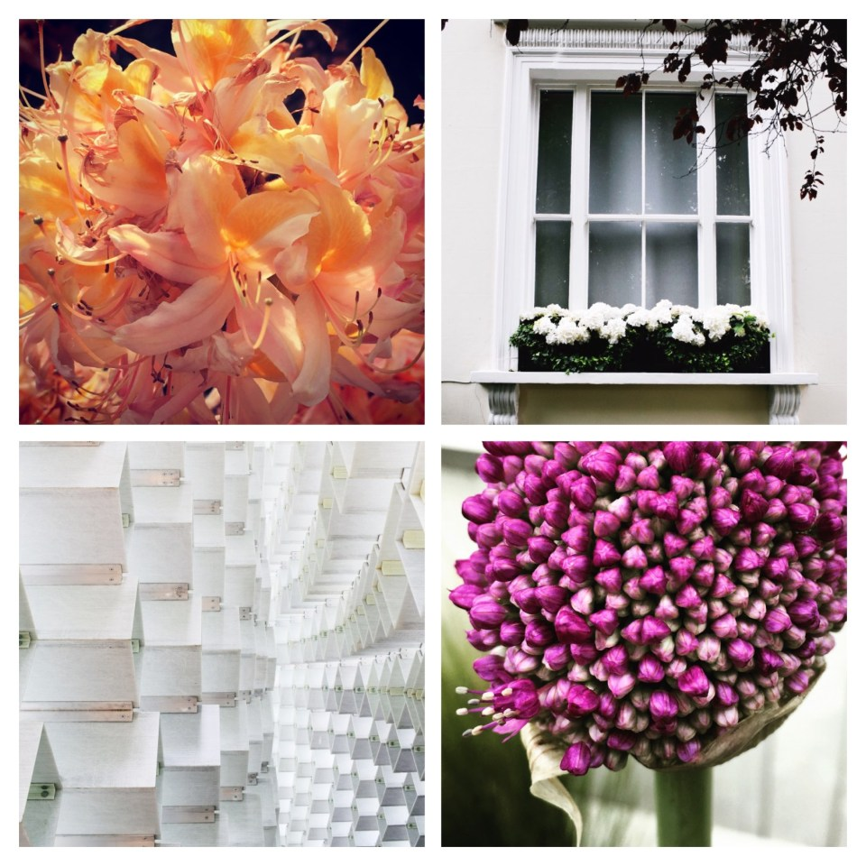 allium gigantium, splendid urban london architecture, white hydrangea window box, peach honeysuckle, serpentine summer pavilion