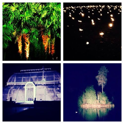 Kew Gardens Christmas Trail - palm trees, glass house, fire torch light