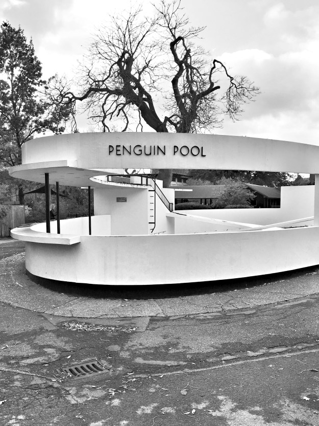 art deco penguin pool at zsl london zoo