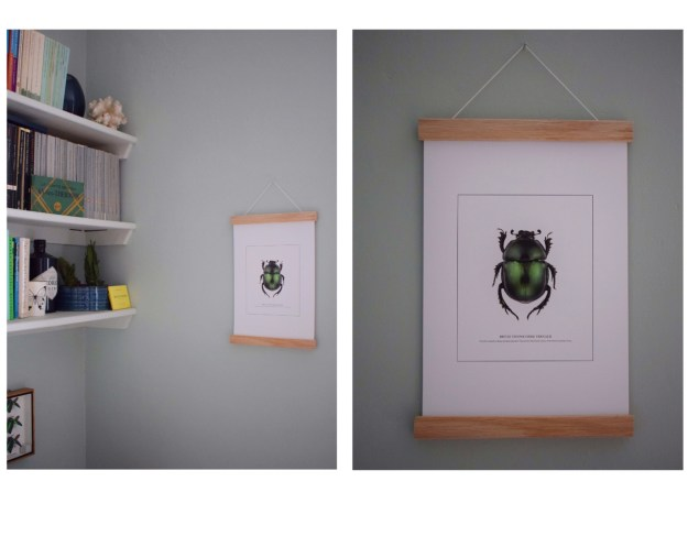 Interior design ideas entomology bug beetle wall art print
