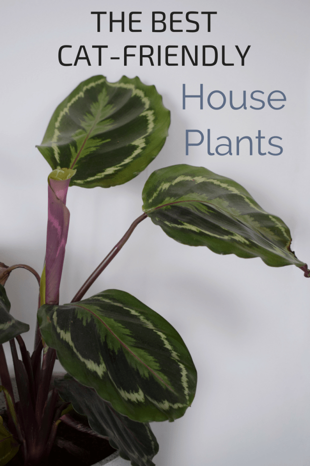 pretty Plants that are not toxic to pets, cat safe house plants
