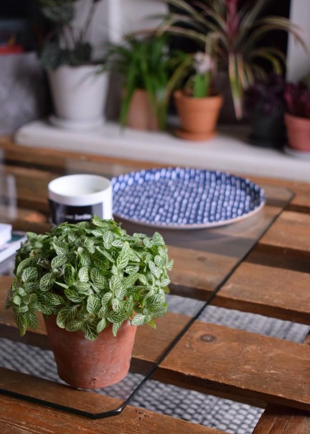 summer styling, botanicals houseplant trend greenterior, urban jungle bloggers (2)