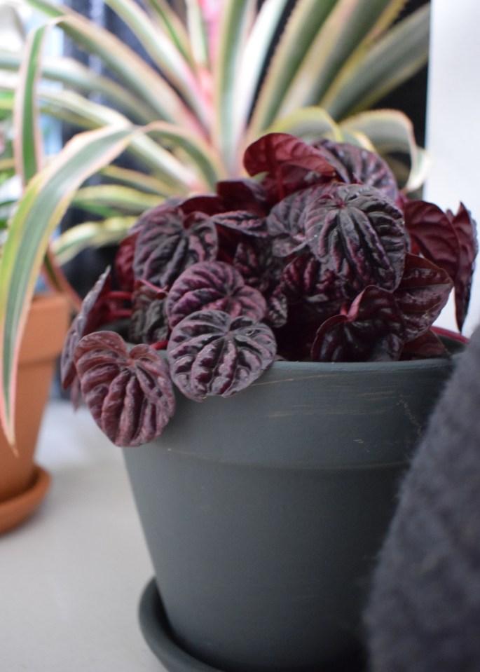 summer styling, botanicals houseplant trend greenterior, urban jungle bloggers