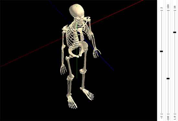 Interactive 3D Skeleton HTML5 Animation Free