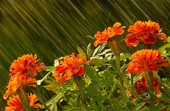 Flower In Rain Best Example