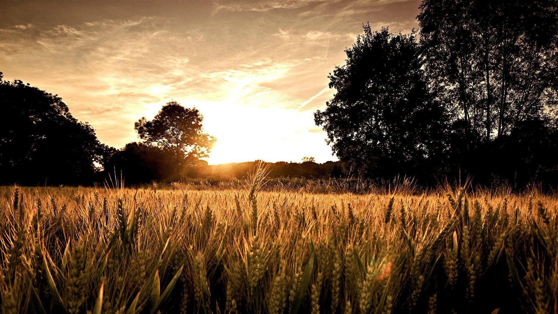 field sun set Resolution Desktop Wallpaper & HD Backgrounds