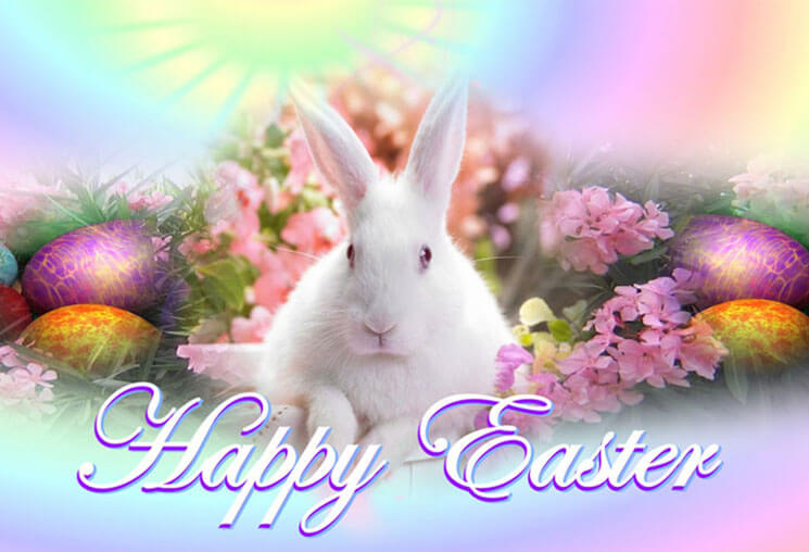 Bunny Most Beautiful & Cute Easter
