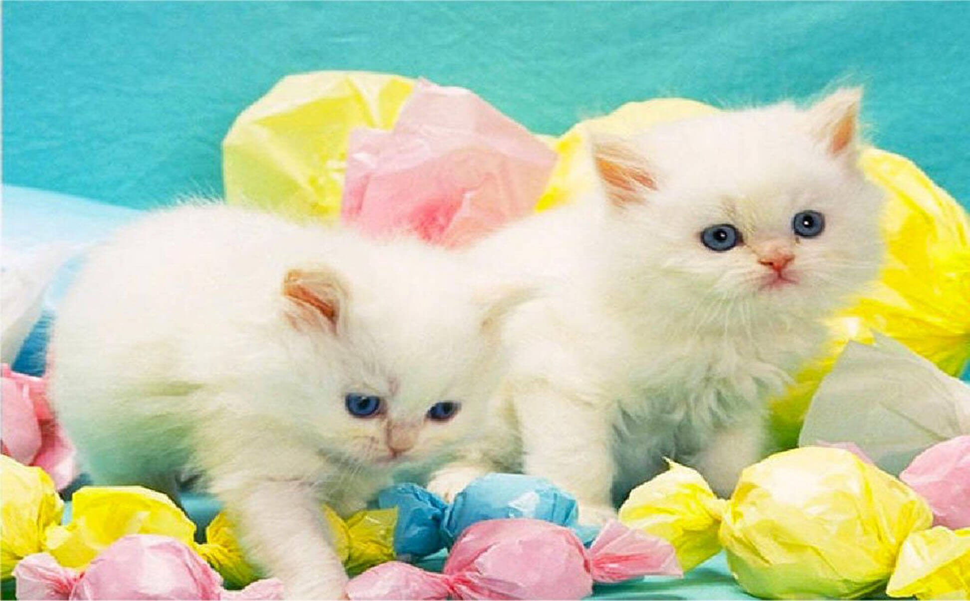 Cats Most Beautiful & Cute
