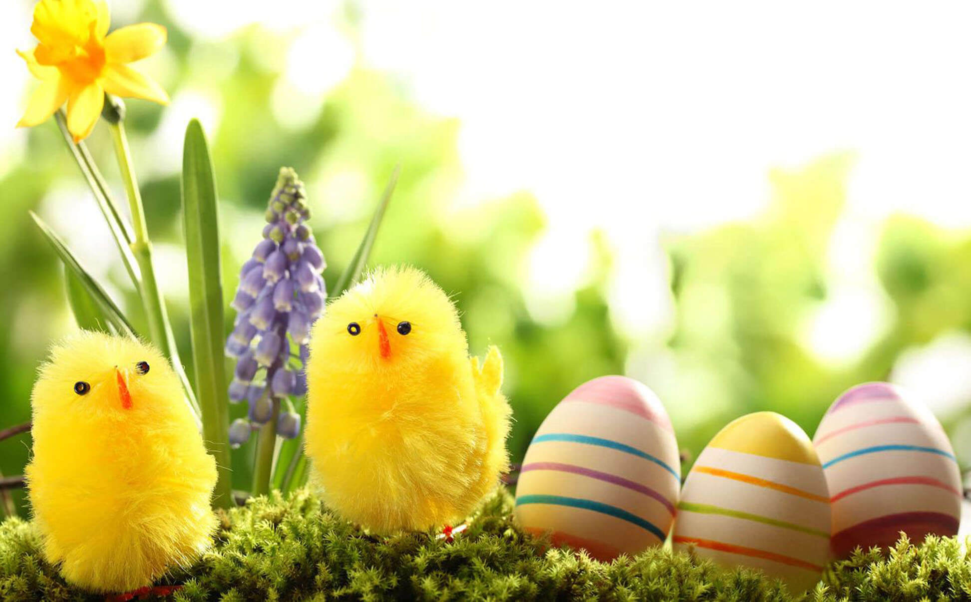 Chicks Cute Easter Wallpaper