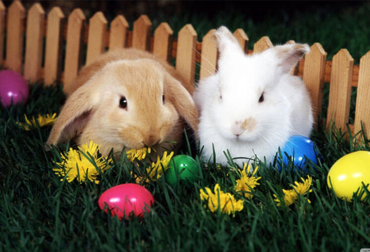 Hunt Beautiful & Cute Easter Wallpaper