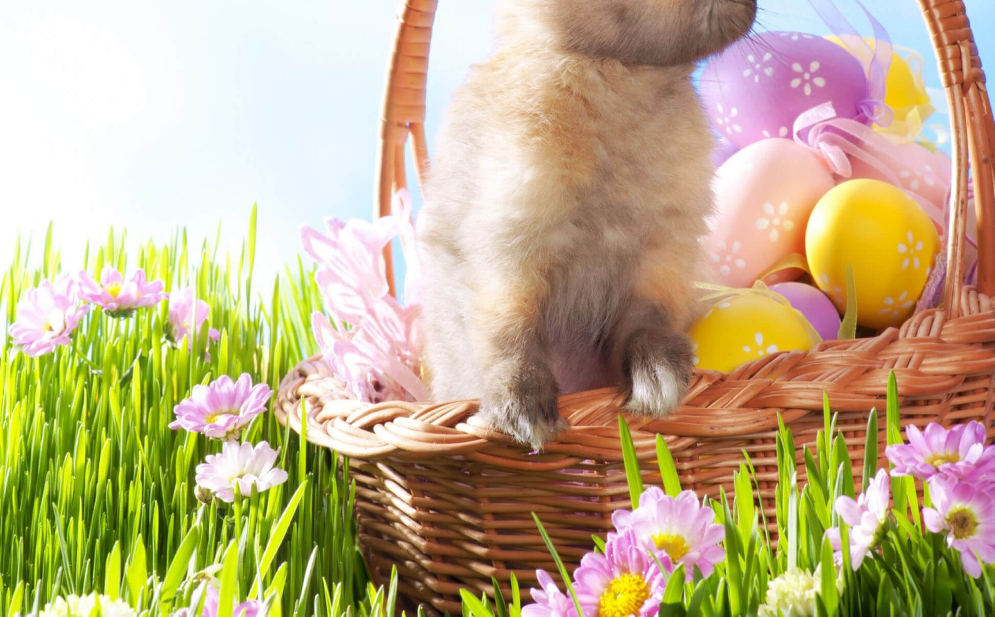 Morning Cute Easter