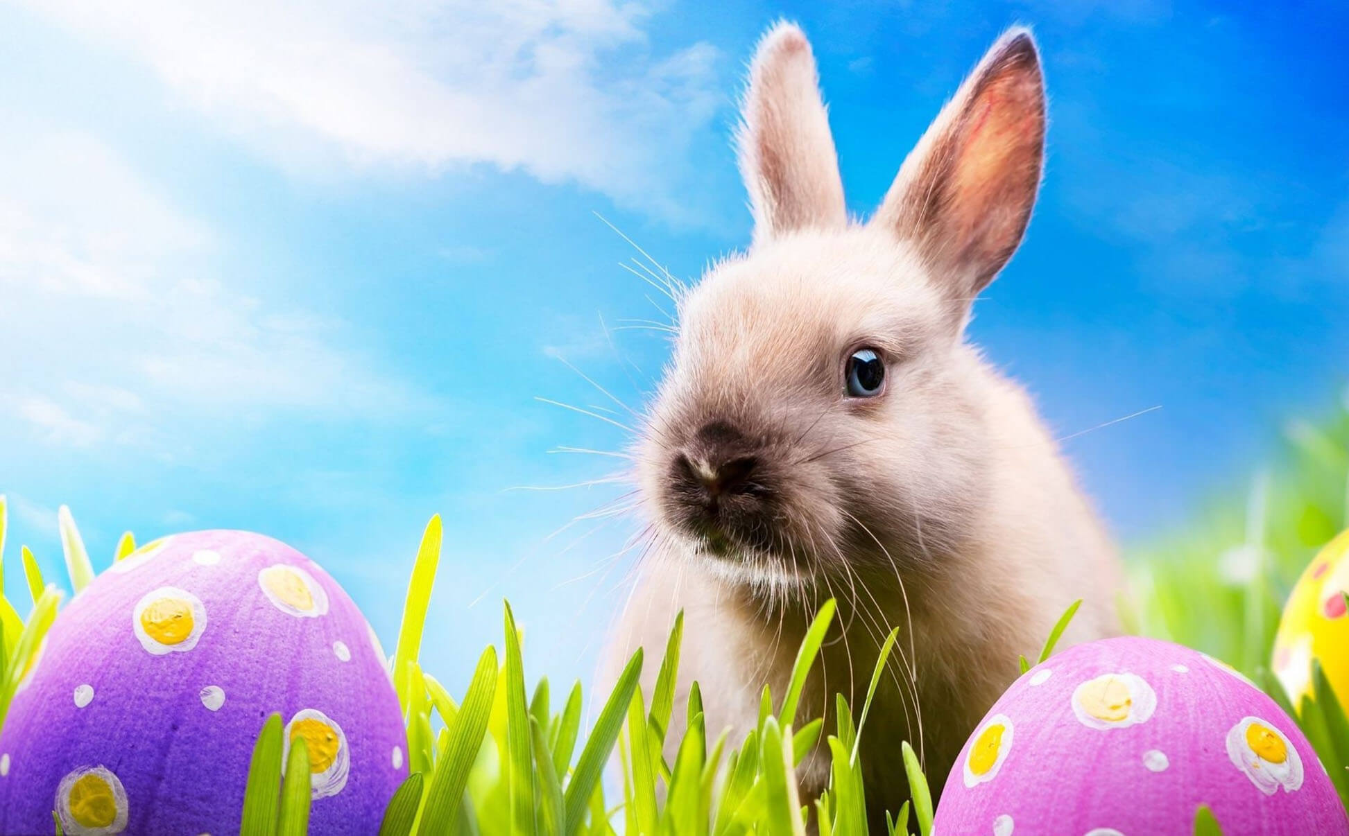 Rabbit Cute Easter Wallpaper