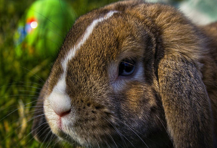 Rabbits Beautiful & Cute Easter