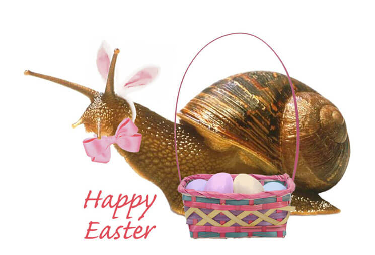 Snail Most Beautiful & Cute Easter Wallpaper