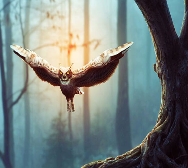 Eagle Extremely Creative Photo Manipulation