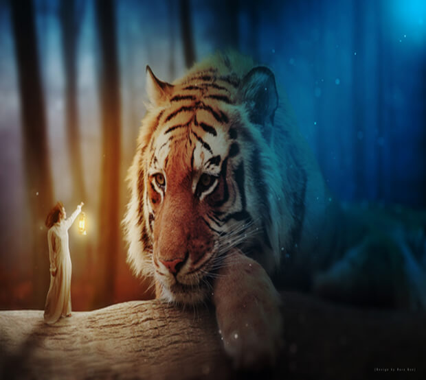 Tiger Extremely Creative Photo Manipulation