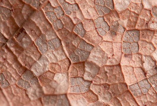 Copper Beech Texture in PSD