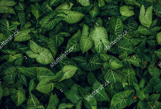 Jungle Texture in PSD
