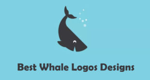 Best Whale Logo Designs