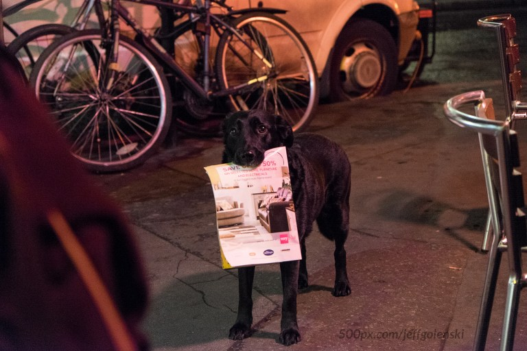 A beggars dog was trained to look especially cute in order to get donations from tourists.