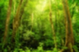 Rainforest Concepts