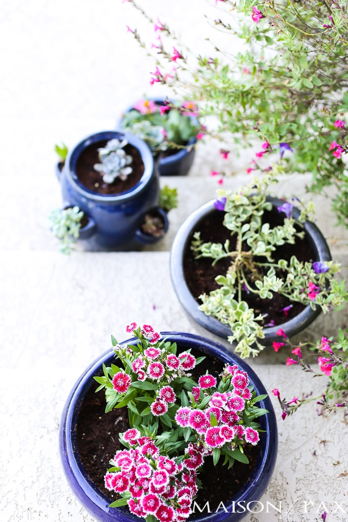Maison de Pax | Tips for Pretty Potted Plants