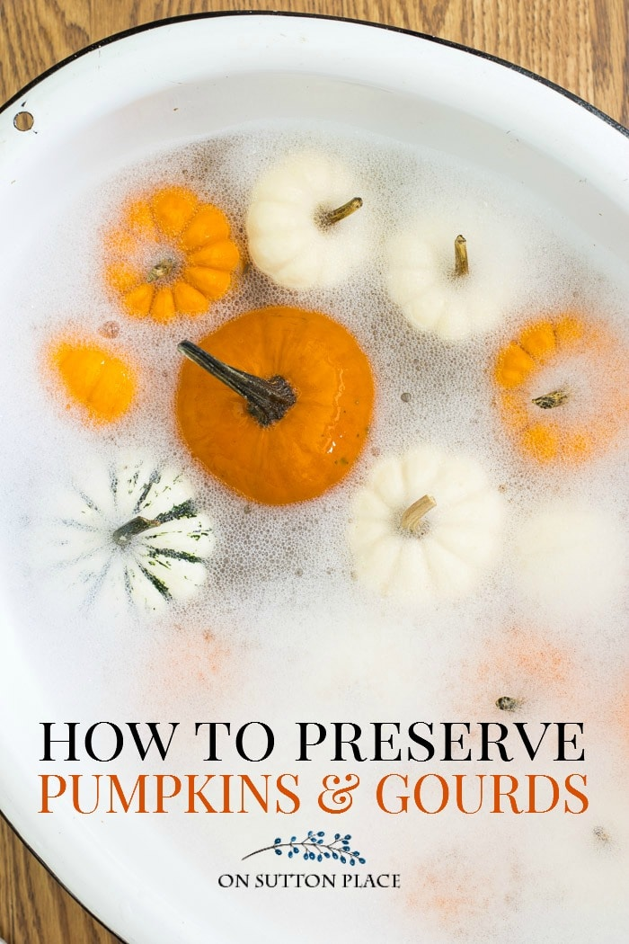 preserve pumpkins gourds on sutton place