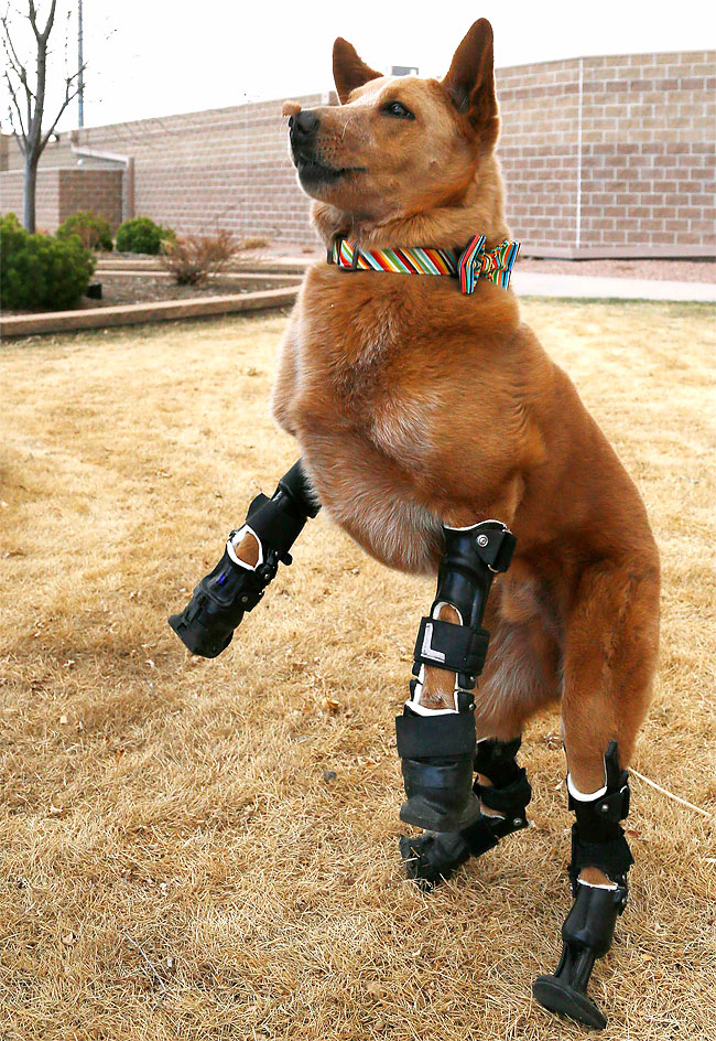 38 Injured Animals Keep Moving with Prosthetics