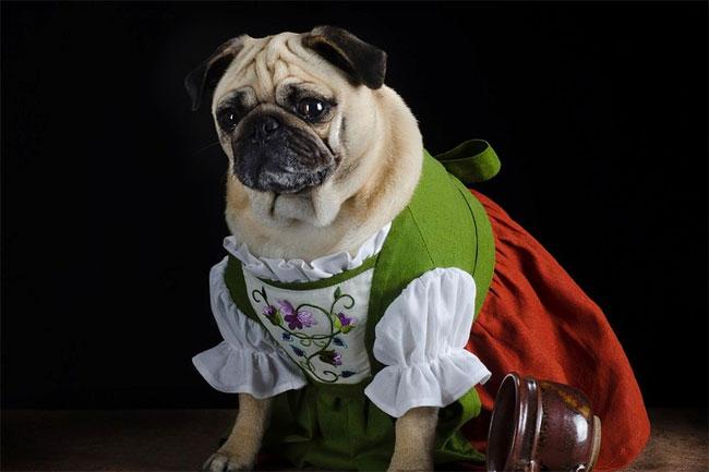 2259 Pugs in Fancy Dress
