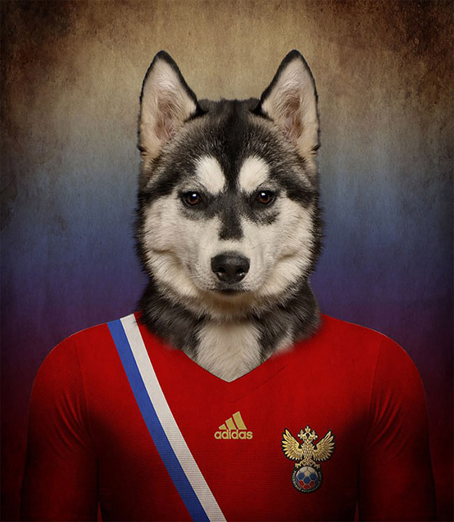 1264 Dogs Of Word Cup Brazil 2014