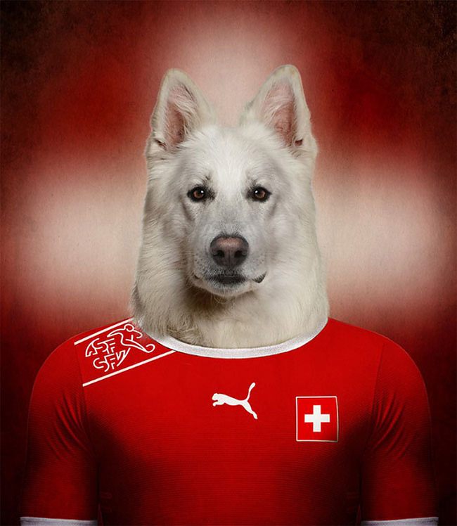 694 Dogs Of Word Cup Brazil 2014